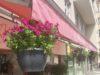 Závěsné květináče – příležitost pro vaši kreativitu