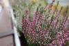 I na podzim a v zimě mohou být vaše okna ozdobena květinami